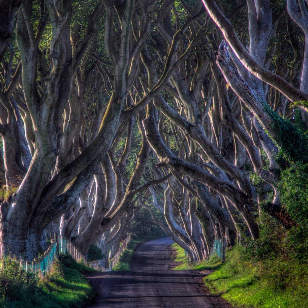 lugares-increibles-sacados-de-cuentos-darkAlley-irlanda